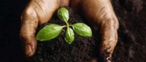 Priprema tla bez oranja – permakultura