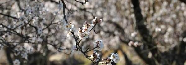 Sretan 8. ožujka – dan žena