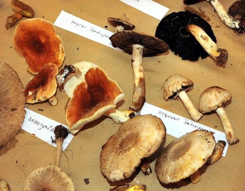 Sve o gljivama!