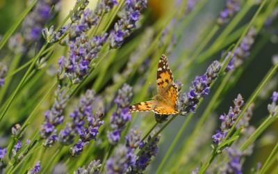 Važnost raznolikosti biljnoga svijeta